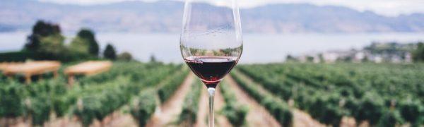 New Wine and Fresh Wineskins
