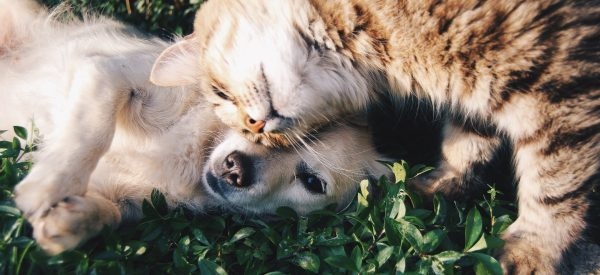 Blessing of Pets</br>October 3, 12:15 pm